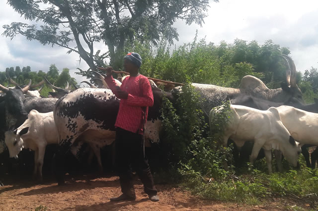 For attacking herdsman, Fayose orders arrest of seven Ekiti youths