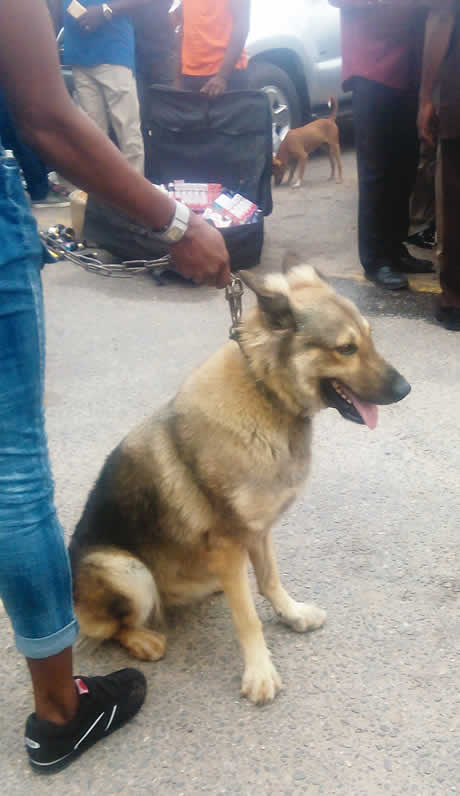 Police 'arrest' Alsatian dog for robbery in Lagos …parade Uber driver, others for murder of GUS winner