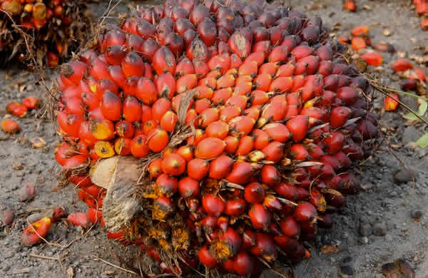 Reps Seek Large Scale Production Of Palm Oil Punch
