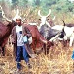 Despite curfew,  suspected Fulani herdsmen kill 27 in fresh Plateau attack